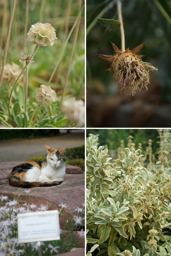 Gatti e piante al Giardino Botanico di Valencia