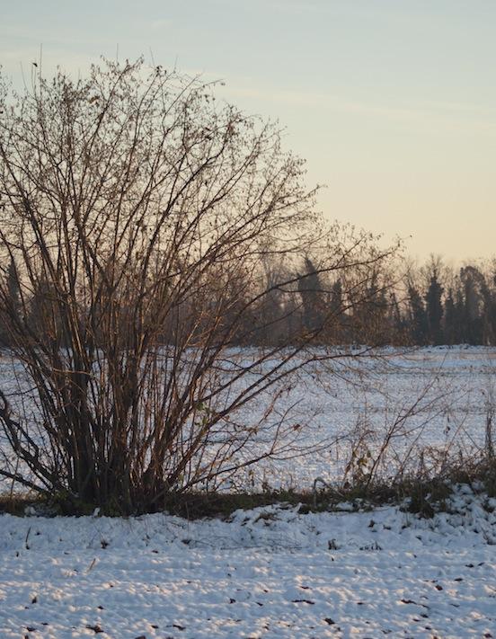 Paesaggio innevato con albero